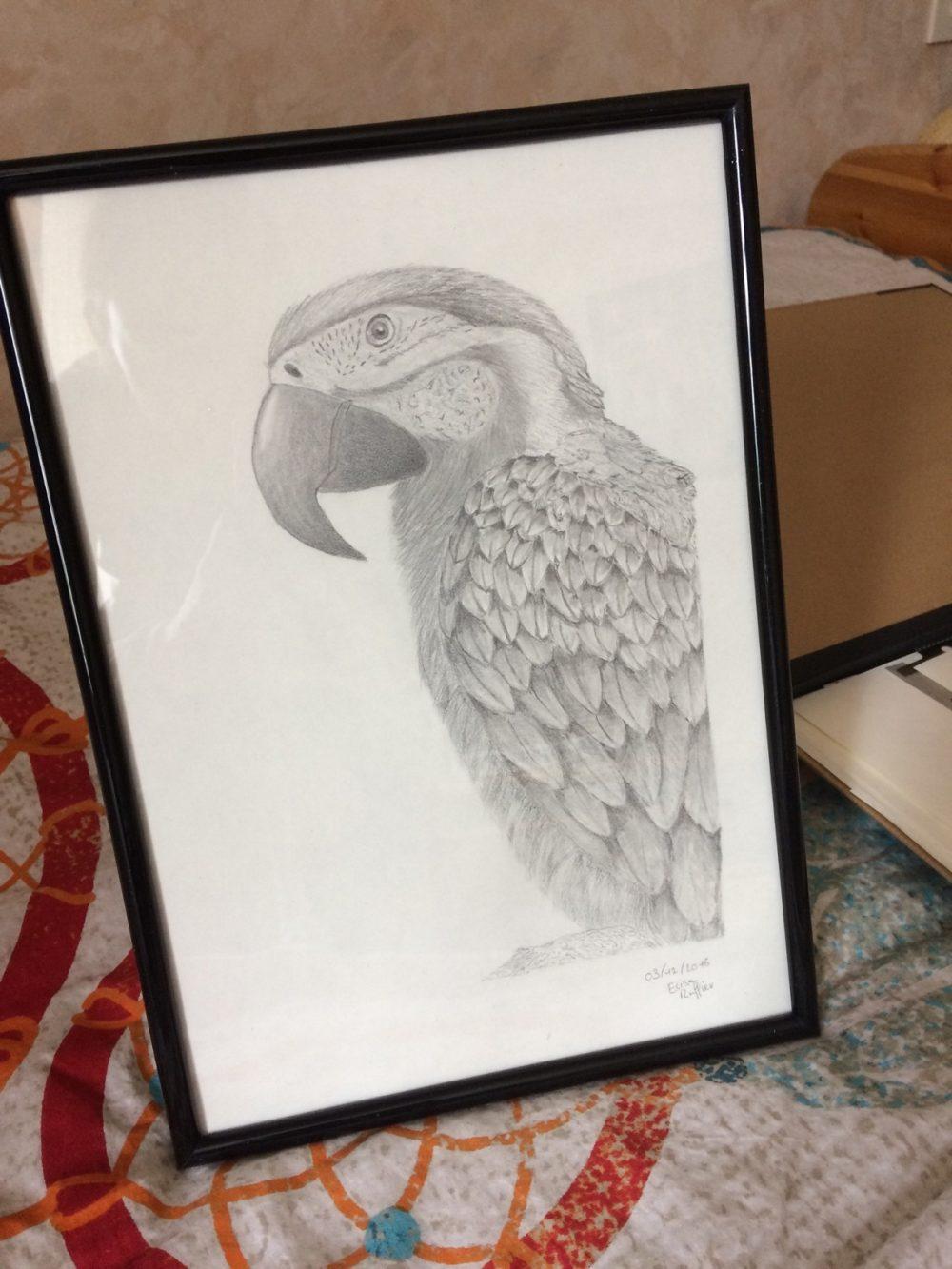 Dessin d'élève perroquet - Atelier Mucyol