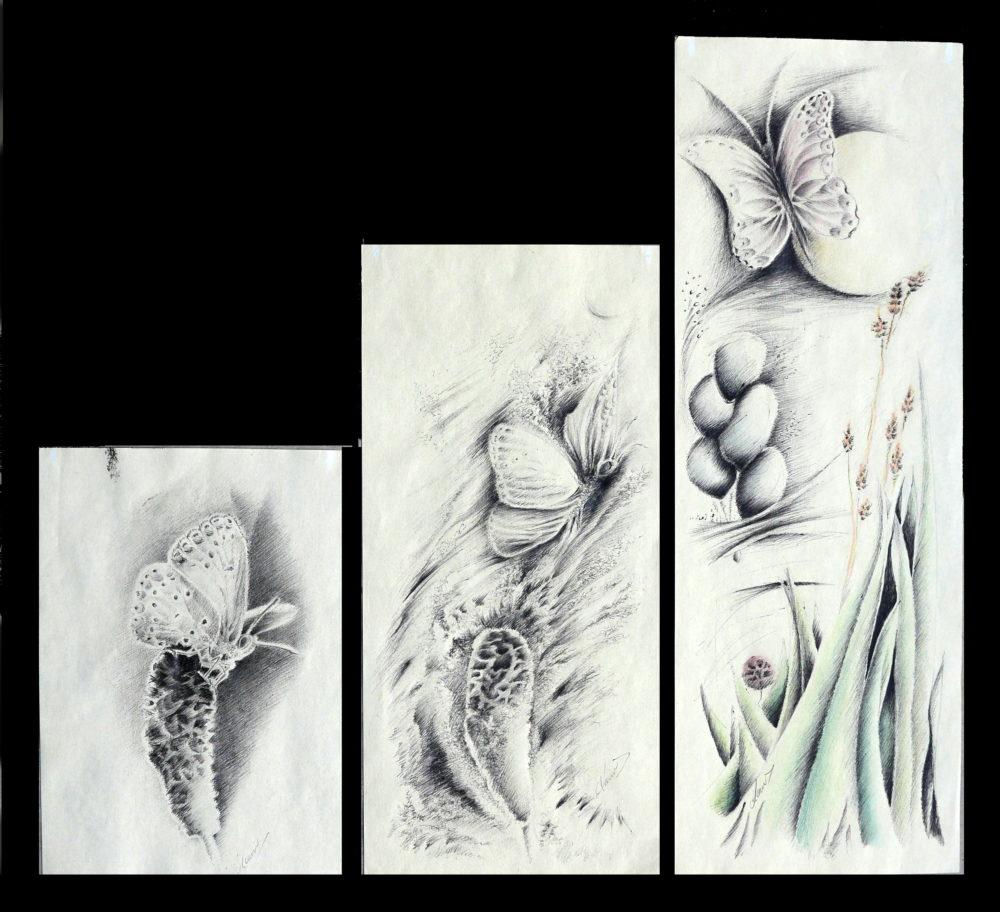 Dessin papillon - Muriel Carayol - Atelier Mucyol
