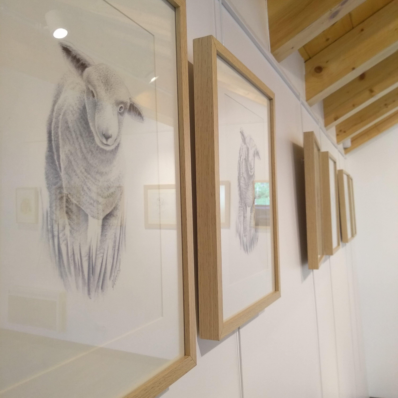 Exposition espace Saint Eloi Séez 73700 - Dessin réaliste mouton - Atelier Mucyol